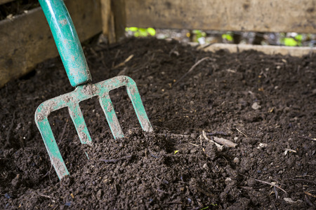 composting: Garden fork turning black composted soil in wooden compost bin