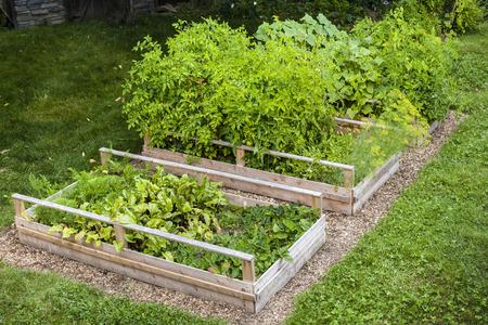 Drei erhöhten Beeten wachsen frischem Gemüse in einem Hinterhof