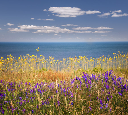 edward: Wildflowers and grasses on Atlantic ocean shore of Prince Edward Island, Canada.