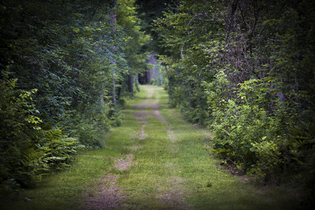 intentionally: Dirt road lined with shrubs and trees through dense green forest. Intentionally shallow depth of field.