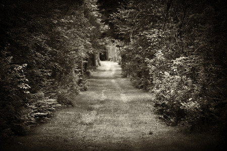 dense forest: Dark moody landscape with tree lined dirt road through dense forest in sepia. Intentionally shallow depth of field. Stock Photo