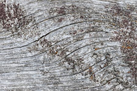 distressed: Gray wooden background of weathered distressed unpainted rustic wood showing woodgrain texture and lichens Stock Photo
