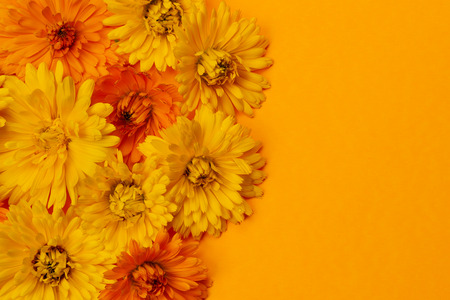 herbology: Yellow and orange medicinal calendula or marigold flowers as fresh floral background