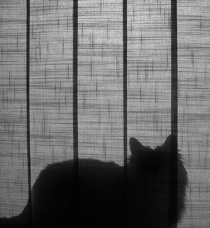 Silueta de un gato sentado detrás de la cortina - en blanco y negro.  Foto de archivo