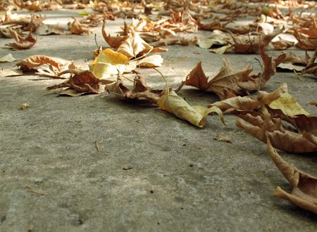 dispersed: Dry, fallen, and yellow leaves dispersed on the ground, with copy space.