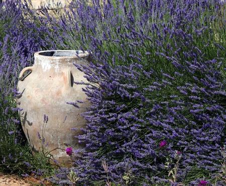 A traditional ornamental jar amidst lush lavenders  photo