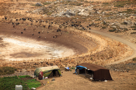 Goats surrounding tents in Lebanese mountains for the homeless refugees and Bedouins. photo