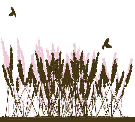 weeds: Illustration of weeds and birds