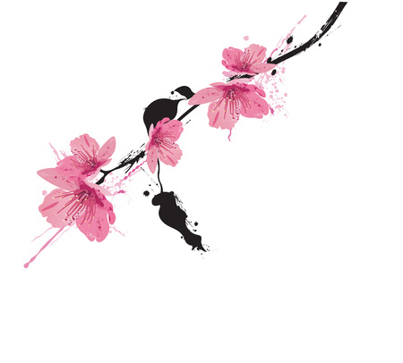 sakura flowers: Illustration of a floral background