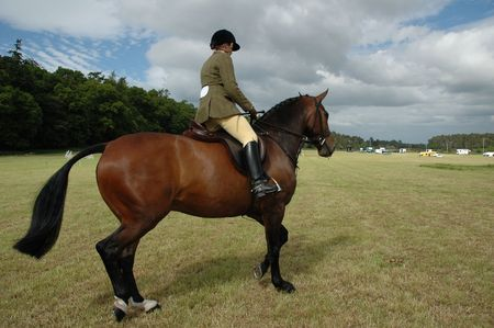Horse with jockey at dressage tests in the park Stock Photo - 496157