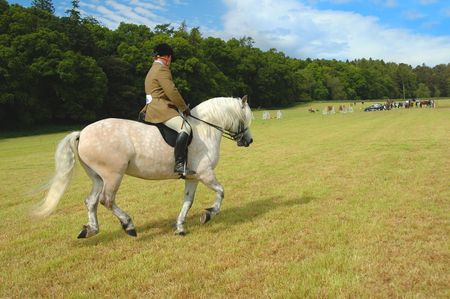 Horse with jockey at dressage tests in the park photo