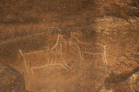 prehistoric age: Ancient carvings of bulls on the stone. Gobustan, Azerbaijan