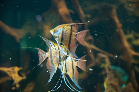 Tropical fish under the water Stock Photo - 21960046