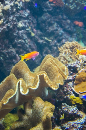 Tropical fish under the water  photo