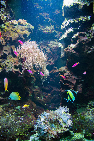 Tropical fish under the water Stock Photo - 22213661