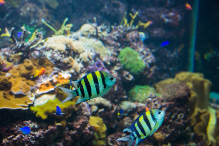 Tropical fish under the water Stock Photo - 22332912