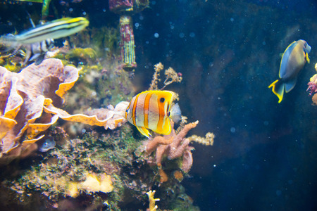 Tropical fish under the water Stock Photo - 22873436