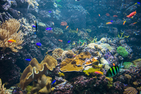 Tropical fish under the water Stock Photo - 22873522