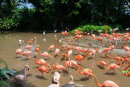 Flamingo birds in the pond Stock Photo