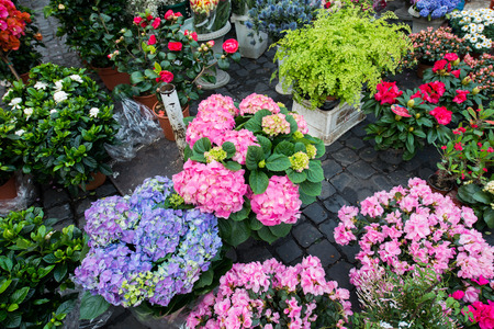 Street flower shop with colourful flowers Stock Photo