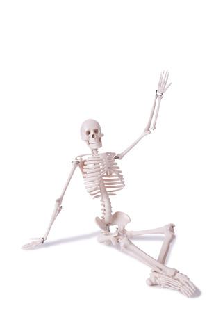 Skeleton isolated on the white background photo