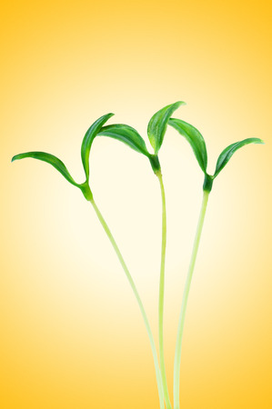 Green seedlings isolated on the white photo