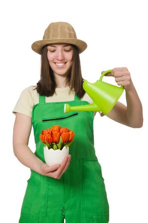 regando plantas: Chica regando las plantas en blanco