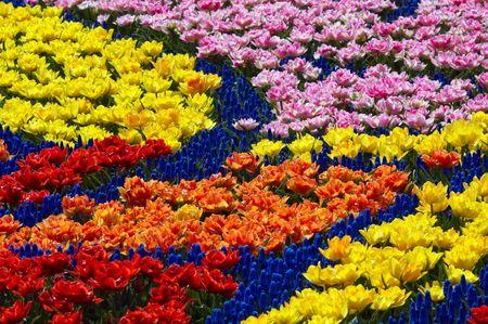 garden key: Bright colors in spring