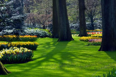 Beautiful flower beds between the trees photo