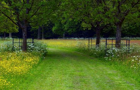 A path between flowers and trees photo