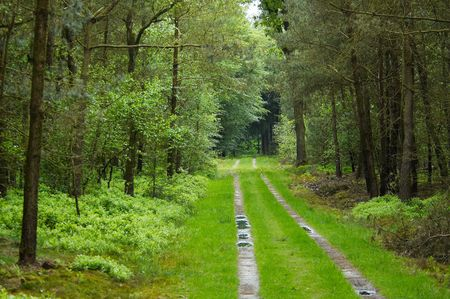A straight road through the forest Stock Photo - 410654