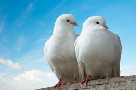 Two love birds against blue sky photo