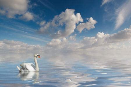 Swan in calm water photo