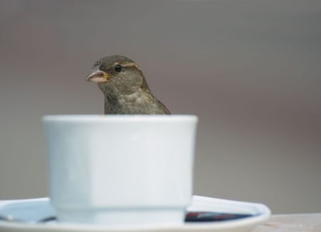 bird and a cup of coffee Stock Photo - 452229