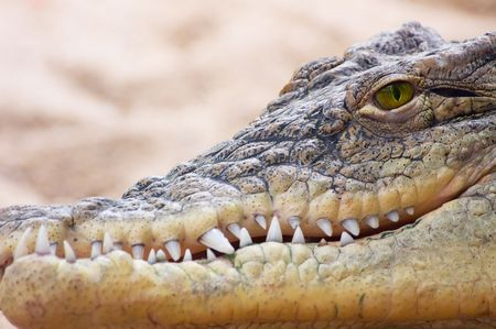 concurrence: Aligator rready to strike