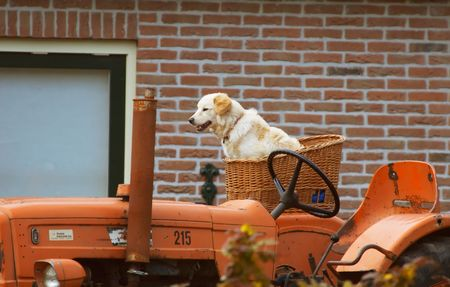 anima: dog on tractor