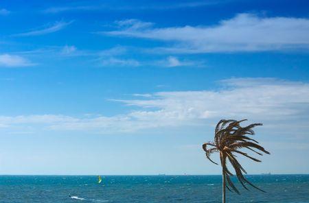 palmtree: lonely palmtree against the ocean