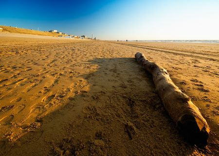driftwood on the beach in the netherlands Stock Photo - 482757