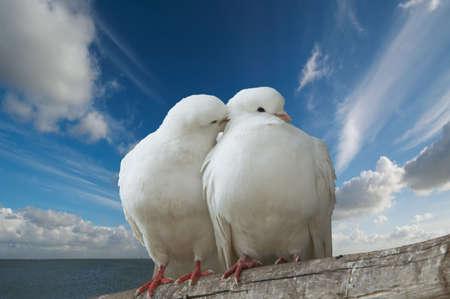 geloof hoop liefde: twee liefde vogels tegen blauwe hemel