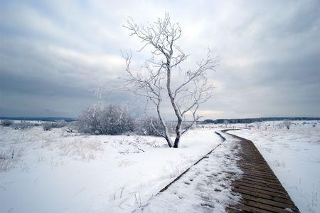 A white winter landscape Stock Photo - 488906