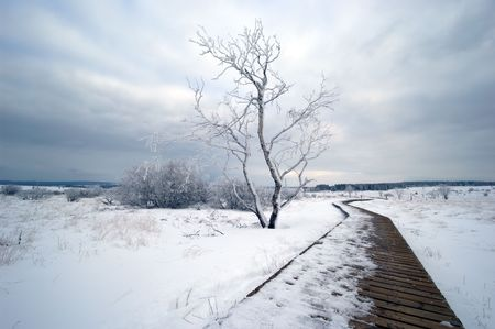 snowlandscape: A white winter landscape