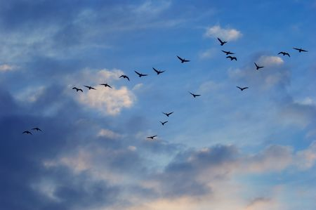 flying geese and clouds background Stock Photo - 488904