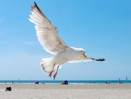 seagull spreads its wings on the beach