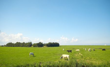 farmland in summer Stock Photo - 488813