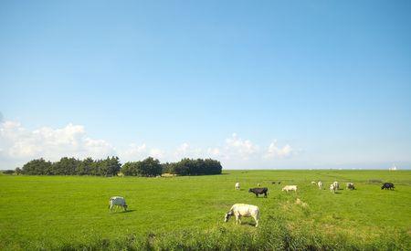 farmland in summer photo