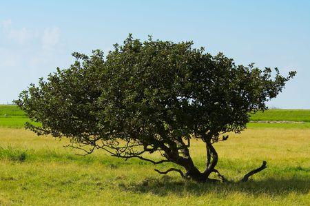 tree background Stock Photo - 488800