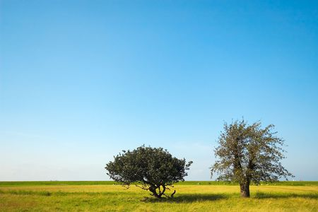 trees in the field photo
