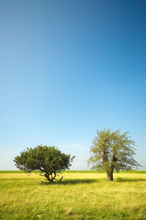 trees in the field Stock Photo - 488787