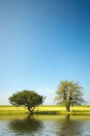 trees and water background photo