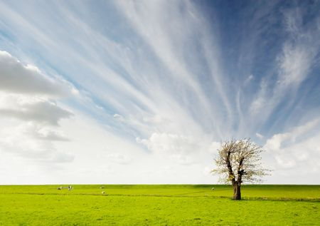 a lonely tree in the field photo